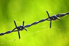 有蜘蛛网的铁丝网篱芭 免版税库存照片