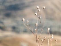 有蜘蛛网的领域植物 图库摄影