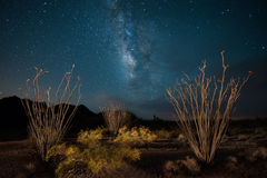 有蜡烛木和银河的亚利桑那沙漠 库存图片