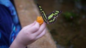 有蝴蝶的小孩在手上 免版税图库摄影