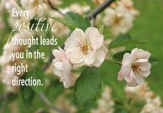 有行情的桃红色花和绿色叶子 库存图片