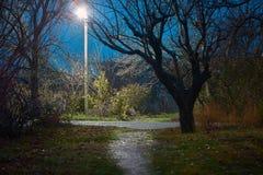 有街灯的空的小径 免版税库存图片