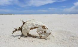 有被保存的标度的鱼骨骼 库存图片