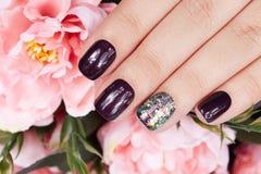 有被修剪的钉子的手上色与黑暗的紫色指甲油和桃红色牡丹开花 免版税库存照片