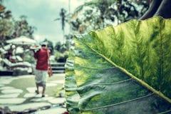 有被分类的五颜六色的花和植物的豪华的热带庭院 可视巴厘岛美丽的印度尼西亚海岛kuta人连续形状日落的城镇 库存照片