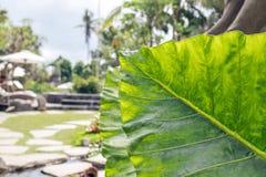 有被分类的五颜六色的花和植物的豪华的热带庭院 可视巴厘岛美丽的印度尼西亚海岛kuta人连续形状日落的城镇 免版税库存图片