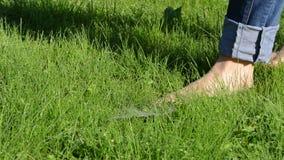 有被卷起的牛仔裤的赤足妇女在满地露水的早晨草走 影视素材