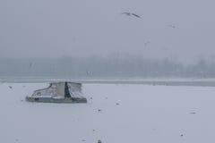有被夺取的小船和海鸥的冻多瑙河 免版税图库摄影