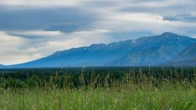 有被弄脏的森林、山和多云天空的高草草甸 库存图片