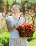 有被收获的蕃茄篮子的妇女  免版税图库摄影