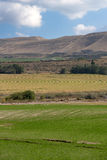 有被灌溉的领域和庄稼的农田 库存照片