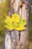有被雕刻的心脏的秋天叶子 免版税库存照片
