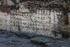 有被雕刻的头骨的Tzompantli法坛在阿兹台克寺庙Templo市长荡桨在特诺奇提特兰-墨西哥城,墨西哥废墟  免版税库存图片