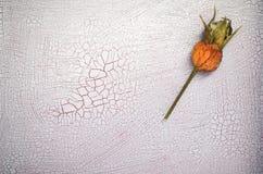 有裂痕的油漆表面上的玫瑰果 库存照片
