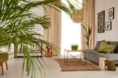 有装饰棕榈的客厅 免版税库存图片