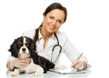 有西班牙猎狗的兽医妇女 库存照片