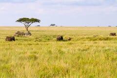 有观看大象的游人的徒步旅行队汽车 图库摄影
