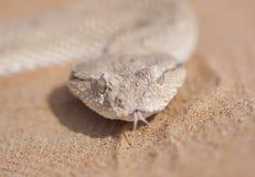 有角的蛇蝎画象 库存图片
