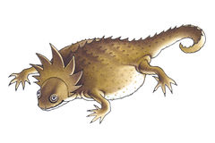 有角的蜥蜴(Phrynosoma) 免版税库存照片