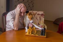 有认为在下棋比赛的接下来的步骤的basenji狗的人 图库摄影