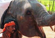 有训练的大象的印地安人 免版税图库摄影