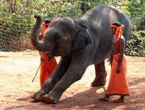 有训练的大象的印地安人 免版税库存照片
