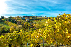有议院的解决葡萄园的在秋天 库存图片