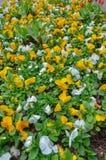 有许多五颜六色的花的庭院 库存照片