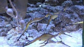 有许多另外好的鱼的五颜六色的水族馆 股票视频