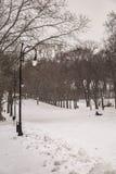 有许多大树的,杉木,儿童雪撬冬天美丽的公园,是 免版税图库摄影