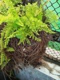 有许多枝杈的植物 免版税图库摄影