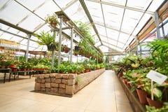 有许多植物的走廊在园艺中心 免版税库存照片
