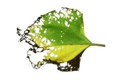 有许多的叶子孔 免版税库存图片