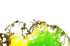 有许多的叶子孔 免版税库存照片