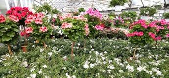有许多的温室在批发的花 库存图片