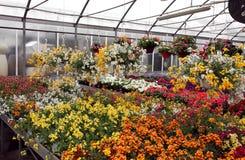 有许多的温室花盆在批发开了花 免版税库存照片