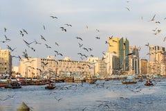 有许多的迪拜Creek海鸥和abra小船在日落,阿联酋 免版税库存图片