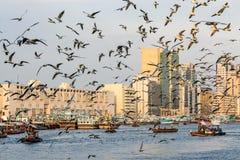 有许多的迪拜Creek海鸥和abra小船在日落,阿联酋 库存照片