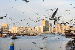 有许多的迪拜Creek海鸥和abra小船在日落,阿联酋 免版税图库摄影