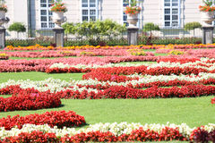 有许多花床的花园与许多在pa的花 图库摄影