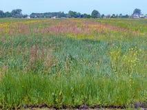 有许多野生植物的草甸,某处在绿色心脏Ho 库存照片