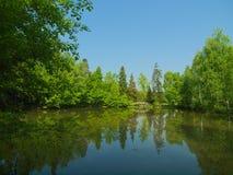 有许多绿色树的Summer湖在明亮的天 免版税库存图片