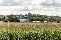 有谷仓筒仓存贮农业动物加拿大种田的农村安大略农场 免版税库存图片