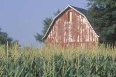 有谷仓的中西部的农场和麦地在南本德,  免版税库存照片