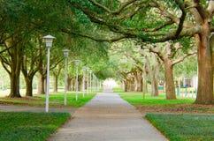 有豪华的绿色树木天棚的美丽的被遮蔽的边路 免版税库存照片