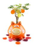 有货币结构树的橙色存钱罐 库存图片