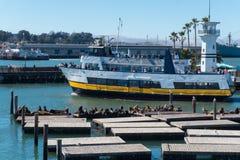 有走动的游艇和的人的码头39小游艇船坞 在一艘木浮船的海狮 免版税库存照片