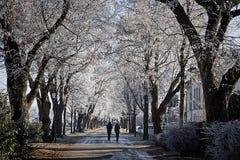 有走在一冷的12月天的夫妇的胡同 免版税库存图片