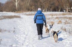 有走在一条积雪的土路的三条狗的妇女 库存照片