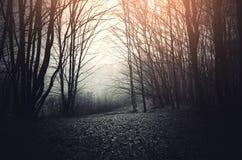 有超现实的光的黑暗的森林 免版税库存图片
